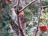 wiewiora